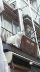 谷中銀座通り.jpg