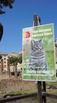 Torre Argentina cat Sanctuary.jpg